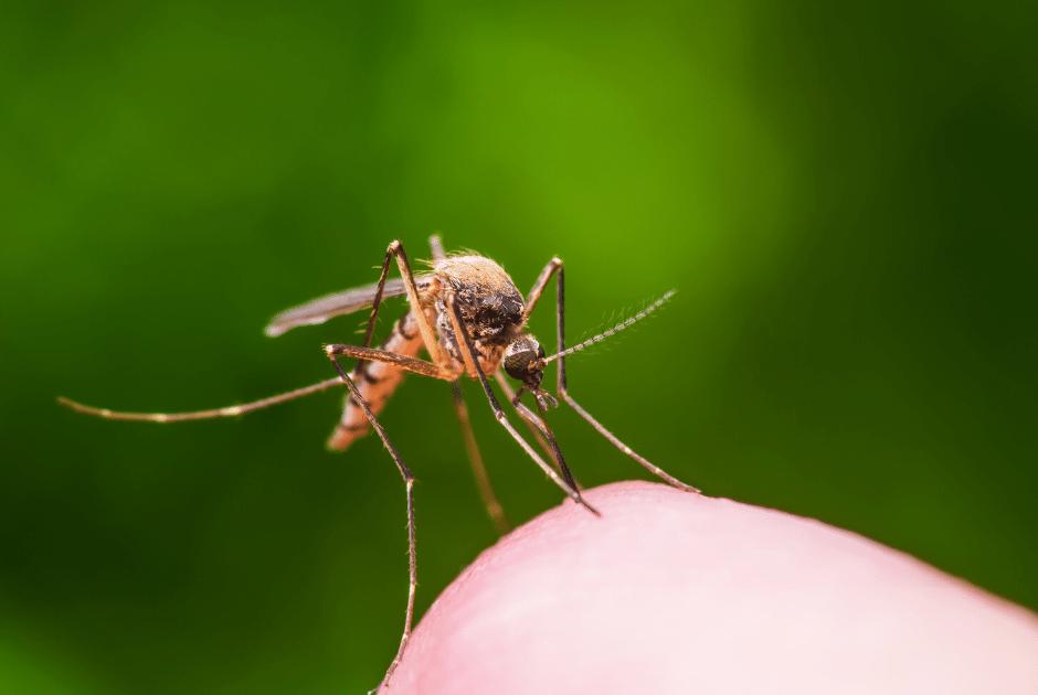 spray moustiques